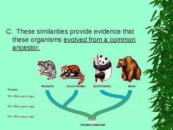 Other Evidence for Evolution PPT