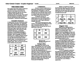 Other Genetic Crosses Graphic Organizer