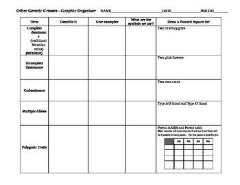 Other Genetic Crosses Graphic Organizer