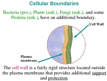 Other Organelles and Cell Parts Lecture PPT