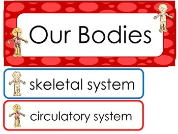 Our Bodies Word Wall Weekly Theme Posters.