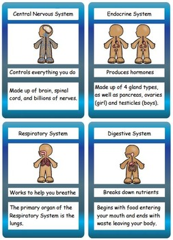 Human Body Flashcards Organs, Skeleton and Systems