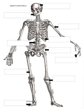 Our Human Bones