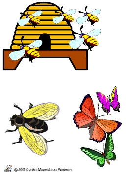 Our Insect Friends