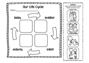 Our Life Cycle: Cut and Paste