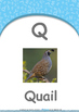 Our World - Cars & Planes : Letter Q : Quail - Nursery (2 years old)
