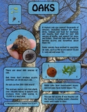 Outdoor Study: Oak Trees