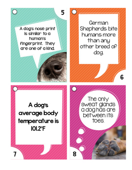 Outrageously True ~ Dog Edition