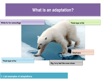 Outstanding adaptations lesson