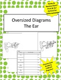 Oversized Ear Diagram - Incl Notes & Bonus Review Chart!