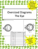 Oversized Eye Diagram - Incl Notes & Bonus Review Chart!