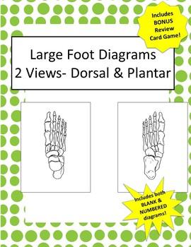 Oversized Foot Diagrams- 2 Views! Includes 2 Versions + Bonus Review Game!!
