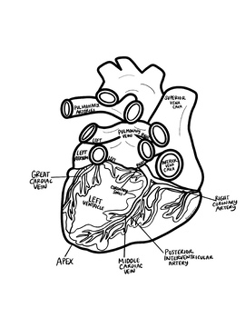 Oversized Heart Diagrams (3 Views)- Incl Notes & Bonus ...