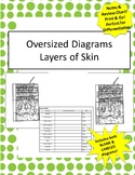 Oversized Layers of Skin Diagram- Incl Notes & Bonus Revie