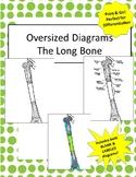 Oversized Long Bone Diagram- Includes Bonus Review Chart!!
