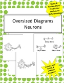 Oversized Neuron & Types of Neurons Diagrams - Incl Notes