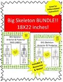 Oversized Skeleton Diagram BUNDLE- 8.5in x 22in! Incl Bonus Activity & Notes!