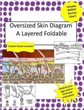 Oversized Skin Diagram FOLDABLE-Incl Student Notes,Glossary +Bonus Review Chart!