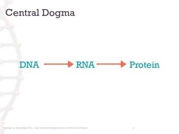 Overview of RNA and Protein Synthesis: Transcription
