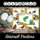 Oviparous Animal Posters & Vocabulary Cards