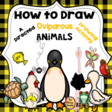 Oviparous Animals A How to Draw Directed Drawing Activity