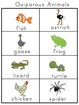 Oviparous Animals Picture Word Bank and Picture Cards