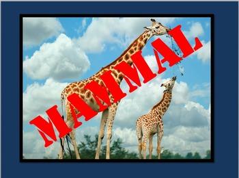Oviparous Animals PowerPoint
