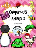 Oviparous Animals Printables--mini-book, sort, and worksheets