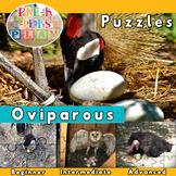 Oviparous Animals: Picture Puzzles Printables | Fine Motor