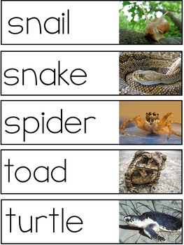 Oviparous Animals Vocabulary
