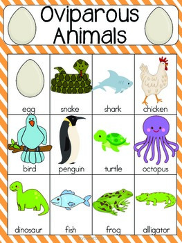 Oviparous Animals Vocabulary Cards