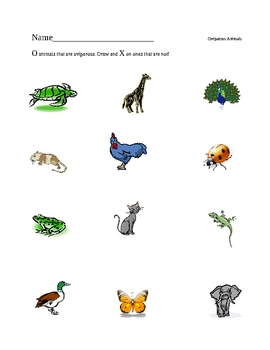 oviparous animals worksheet by amberlyn scott tpt. Black Bedroom Furniture Sets. Home Design Ideas