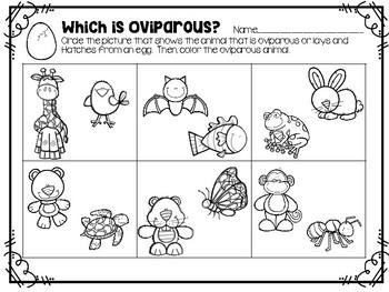 Oviparous And Viviparous Animals Digital Resource And