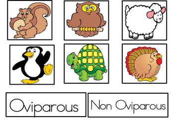 Oviparous and non oviparous animal sort