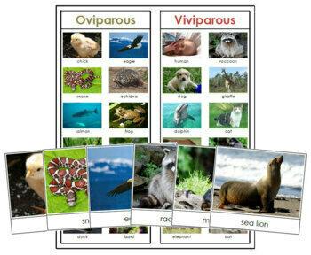 Oviparous or Viviparous Animals: Cards & Chart
