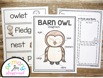 Owl Activities No Prep Math, Literacy and Science Pack