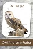 "Owl Anatomy 8x10"" Poster- Montessori- Parts of an Owl"