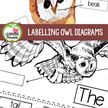 OWLS MINI UNIT (Reading, Writing and Craft Activities)