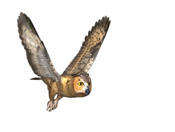 Owl Clip Art Pack #1