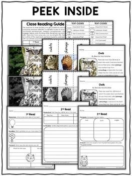 Close Reading Passage - Owl Activities