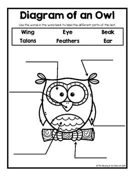 Owl Diagram