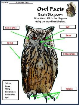 Halloween Activities: Owl Facts Halloween Science Activity Packet