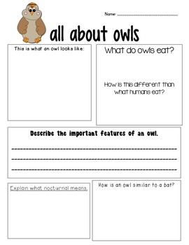 Owl Higher Level Thinking Organizer