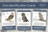 Owl Identification Cards- Montessori