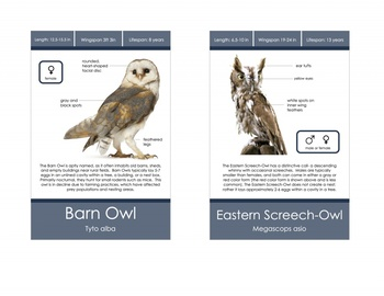 Owl Identification Cards- Montessori
