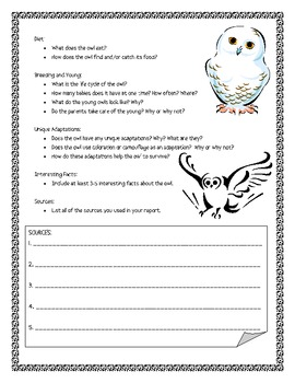 Owl Informational Report Writing Sheets, 13 Total Pages!!
