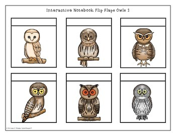 Owls All About Owls Interactive Research Activities