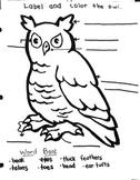 Owl Labeling