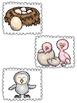Owl Life Cycle