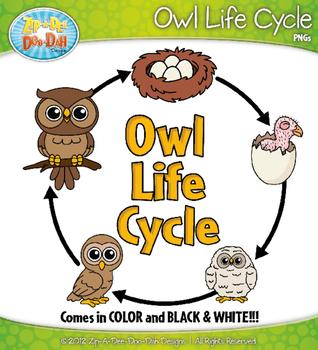 Owl Life Cycle Clipart {Zip-A-Dee-Doo-Dah Designs}